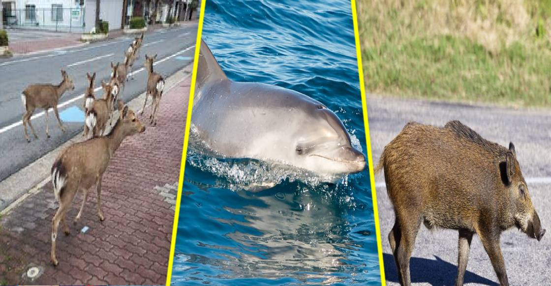¡Jumanji! Los animales colonizan las calles ante pandemia