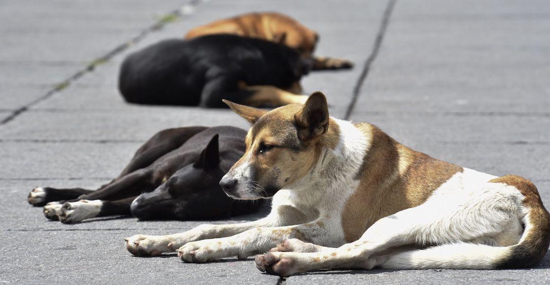 perros-abandono-propuesta-morena