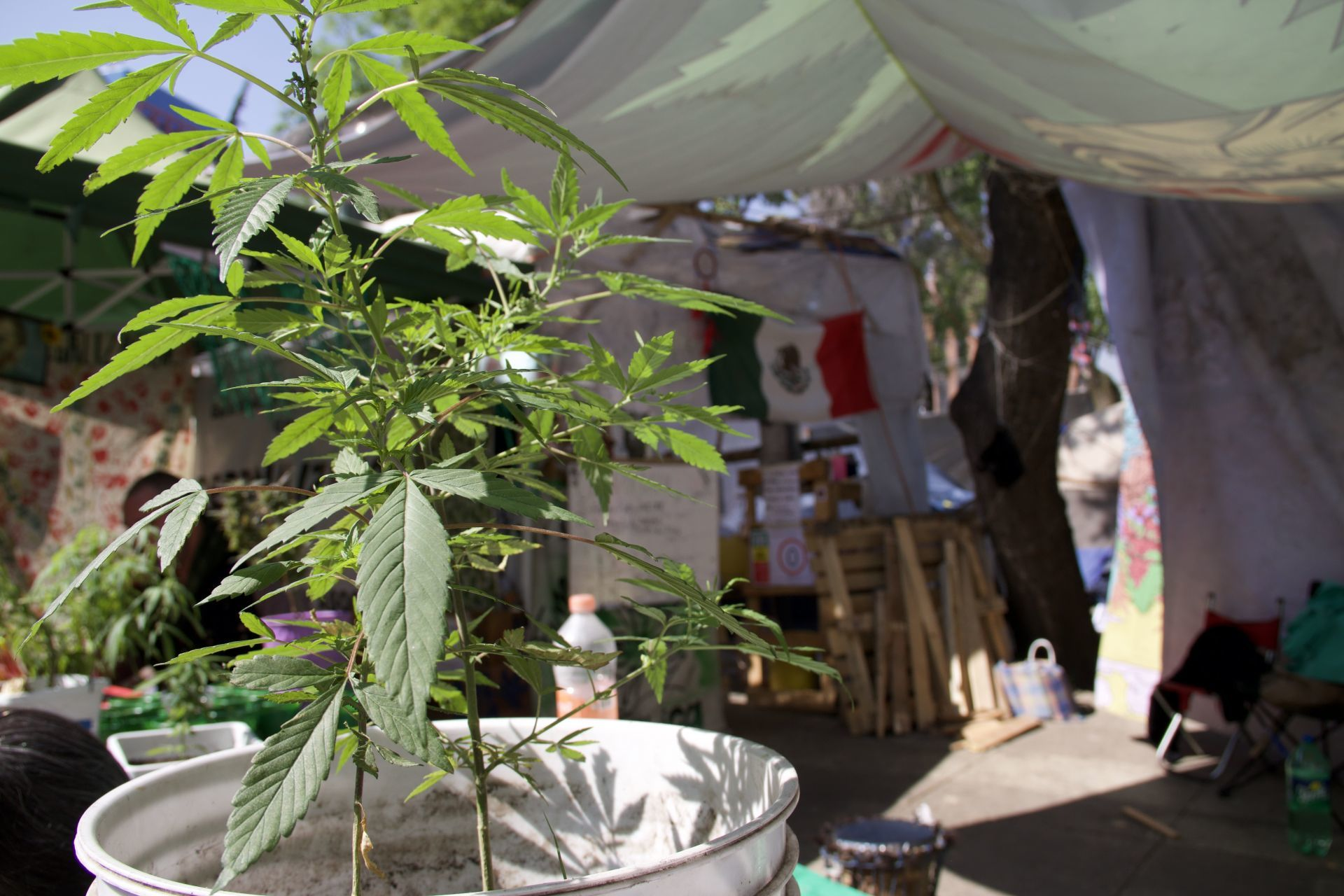senado-regulacion-marihuana