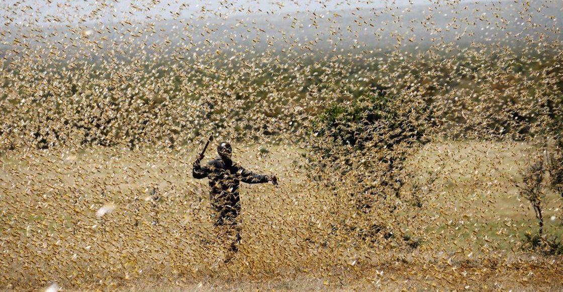 langostas-plaga-biblica-africa-medio-oriente-kenya-fotos-imagenes-videos-onu-01