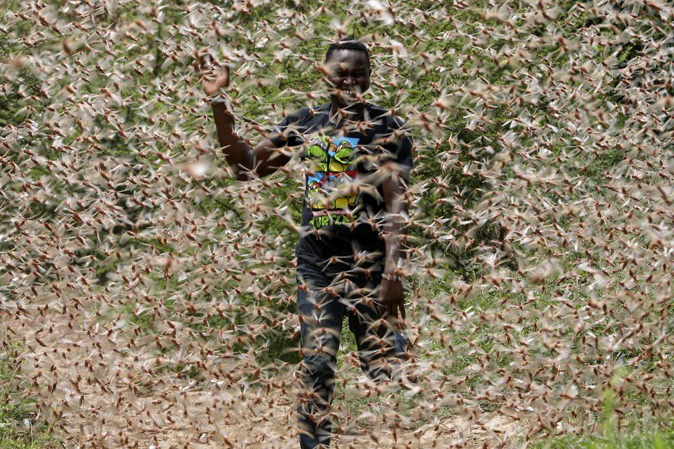 langostas-plaga-biblica-africa-medio-oriente-kenya-fotos-imagenes-videos-onu-04