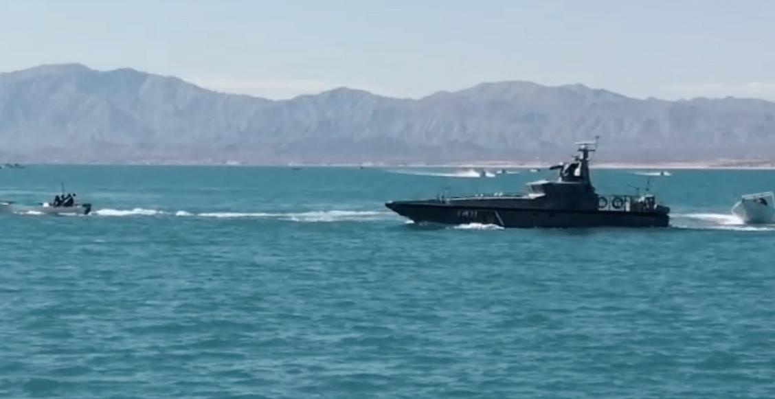 profepa-vaquita-marina-ataque