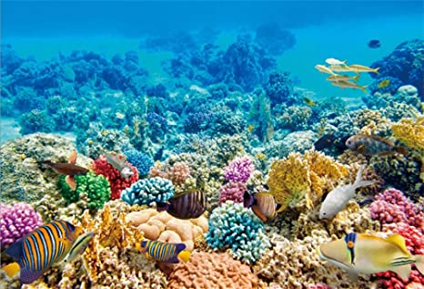 Según la ciencia, los océanos podrían ser restaurados para el 2050