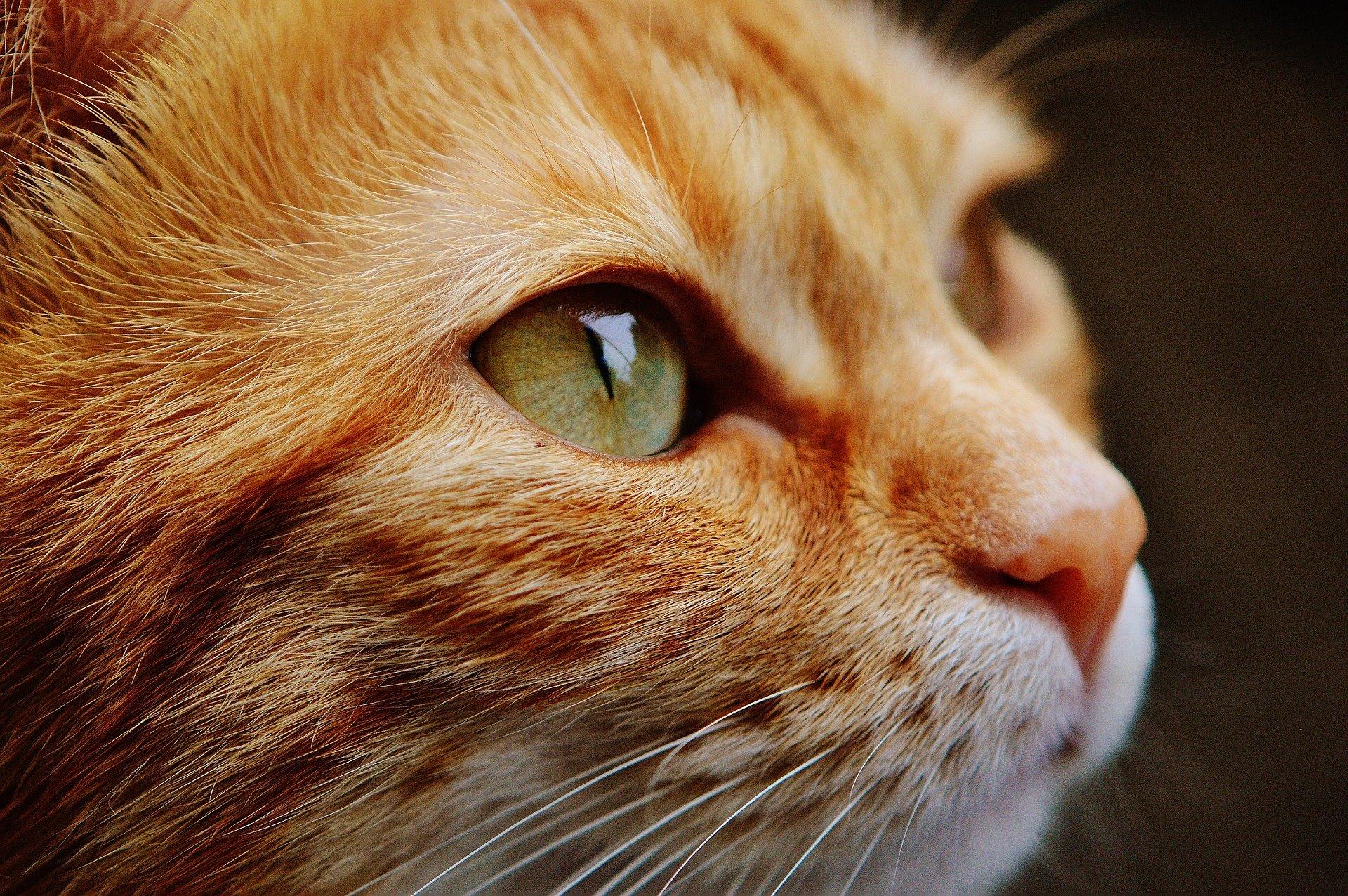 gatos-contagio-coronavirus-estados-unidos