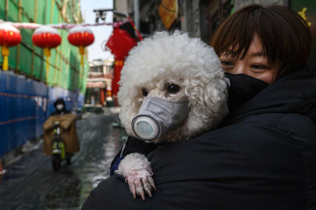 No vaya a ser: La ciudad China de Shenzhen prohíbe el consumo de perros y gatos