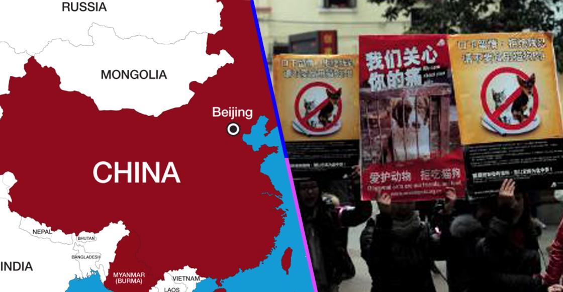 Las autoridades de Wuhan proscriben caza, comercio y consumo ilegal de animales salvajes