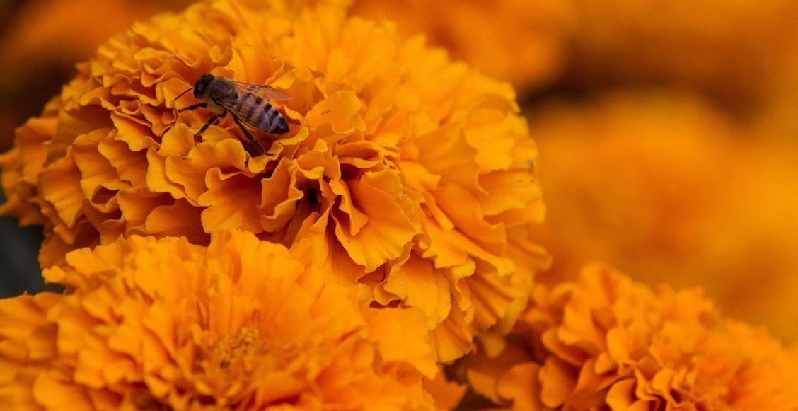 polinizadores-abejas-semarnat-programa-coronavirus