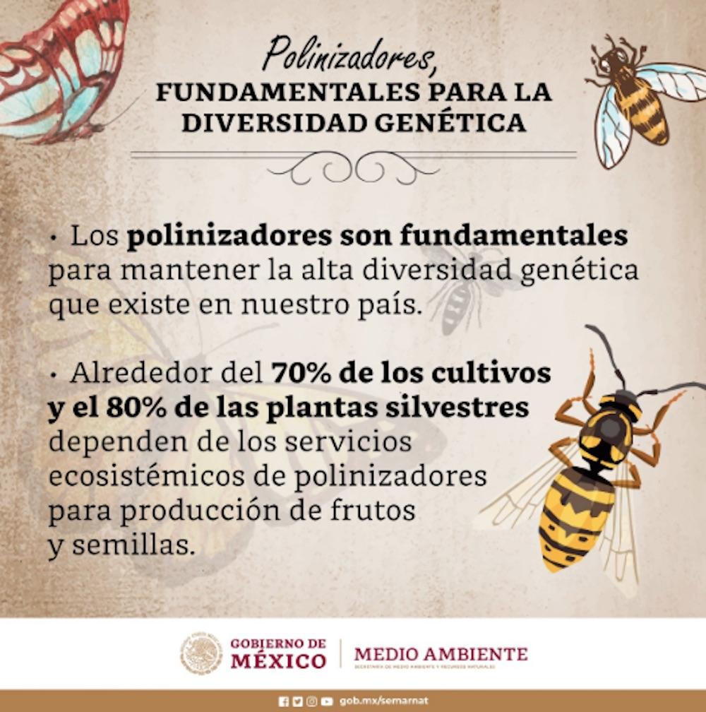 polinizadores-semarnat-coronavirus-abejas