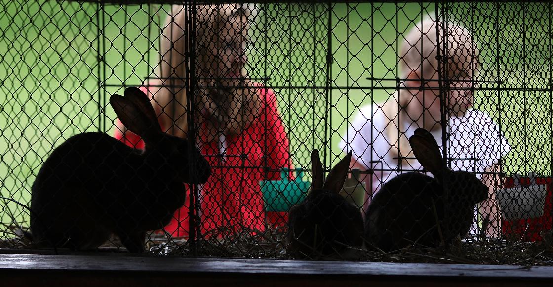 Senado prohibió el uso de animales en pruebas de cosméticos para crear conciencia en la población
