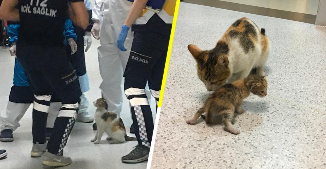 Awww: Esta gatita llevó a su cría al hospital y esperó mientras la atendían