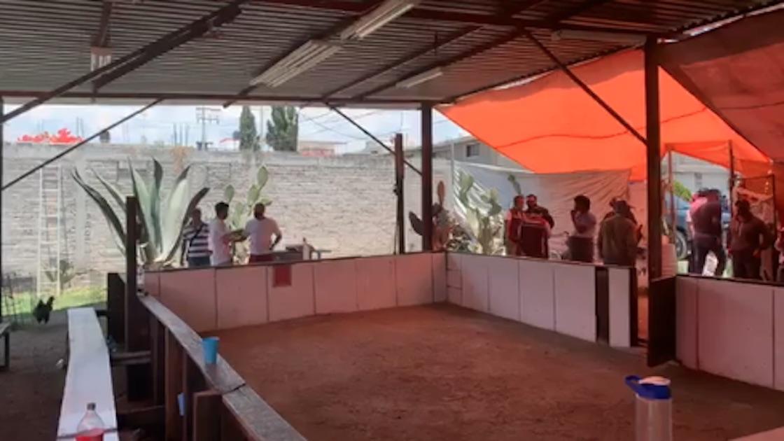 ecatepec-peleas-de-gallos-aglomeracion-coronavirus