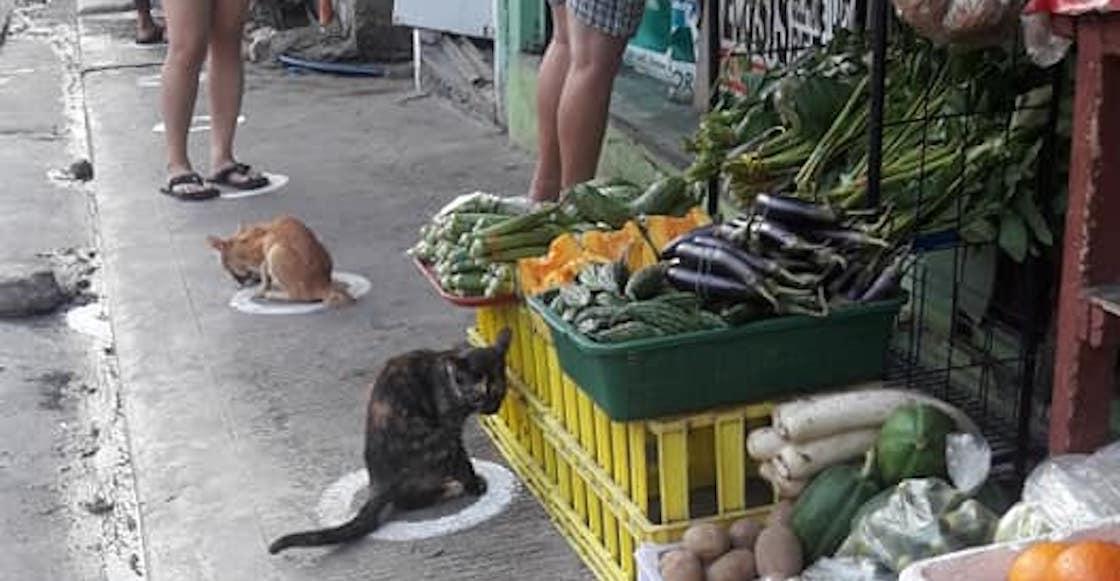 gatos-filipinas