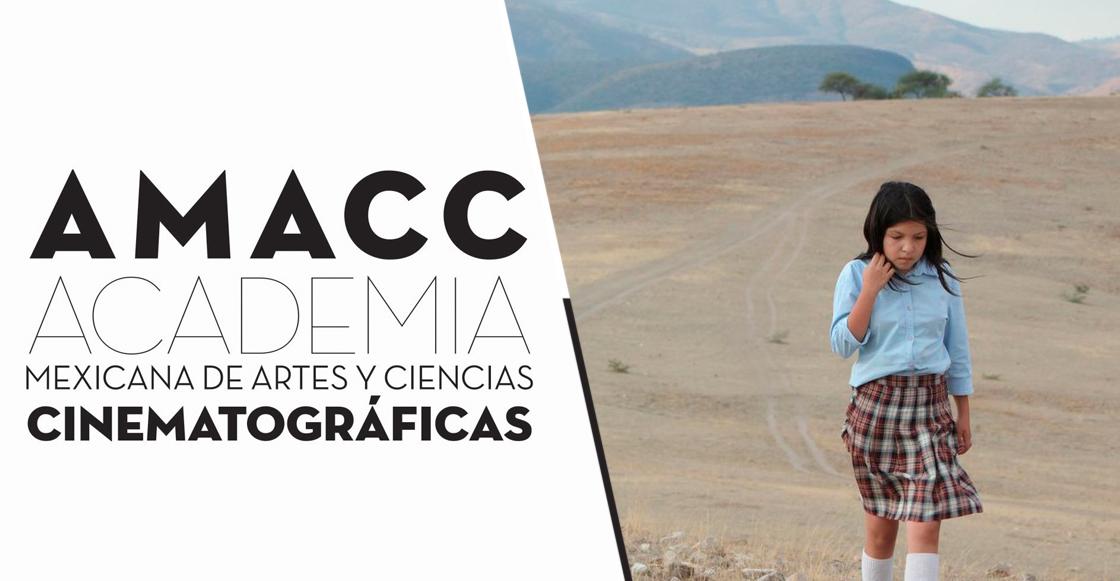 """""""No rompan el diálogo"""": Entrevista con Mónica Lozano de la AMACC sobre el FIDECINE"""