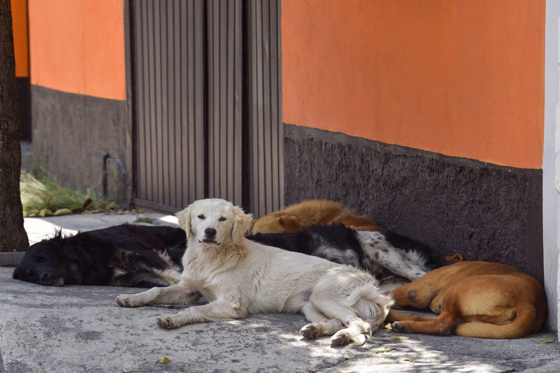 Mundo enfermo y triste: Reportan envenenamiento masivo de perritos en Veracruz