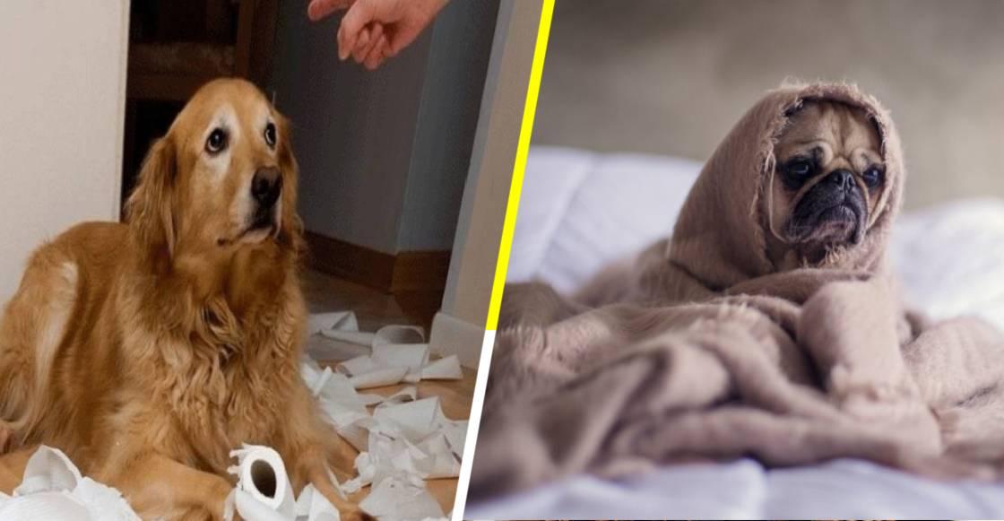 Según la ciencia, la pubertad de los perros es tan difícil como la de los adolescentes