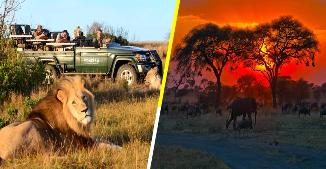 Aventúrate en un Safari en África sin salir de tu casa