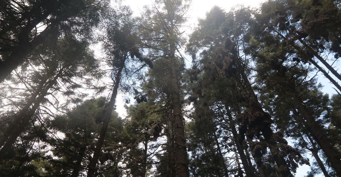 areas-Naturales-Protegidas-conap-recursos