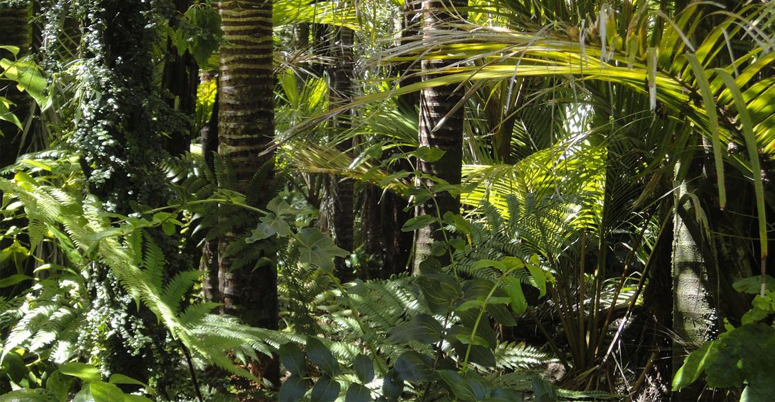 bosques-tropicales-mundo
