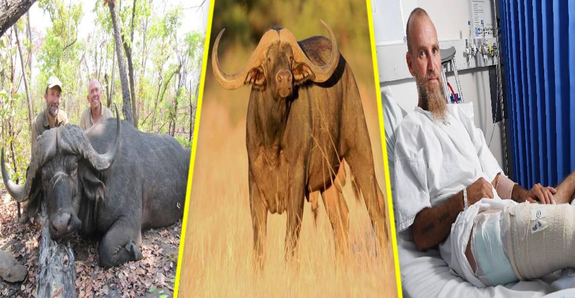 ¡Karma! Búfalo cornea a su cazador antes de morir
