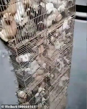 Mundo enfermo y triste: Rescatan a 700 gatos en China que iban a ser vendidos como comida