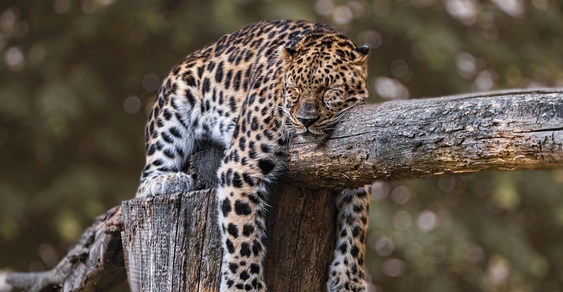 jaguares-mexico-danos-ambientales