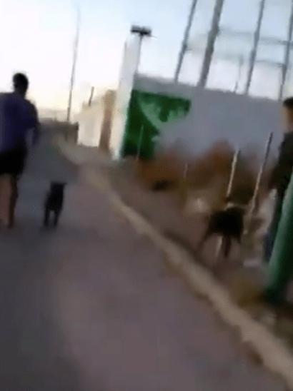 HDLCH: Exhiben a hombres en el Edomex que utilizan a pitbulls para atacar a perritos callejeros