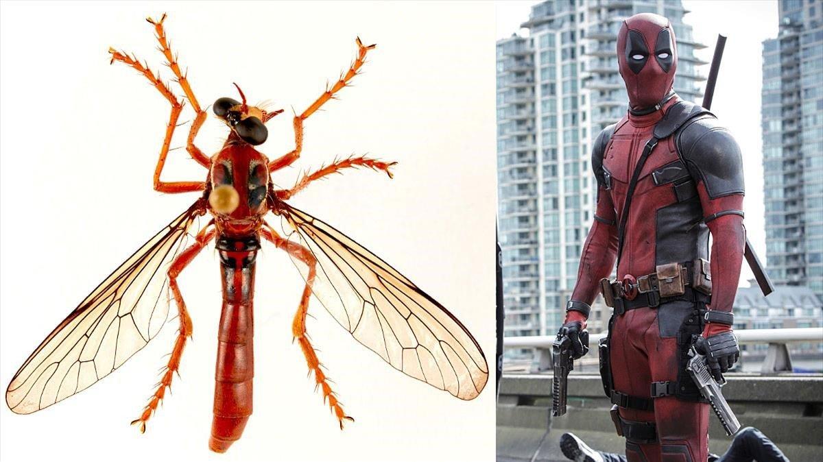 La nueva mosca Deadpool