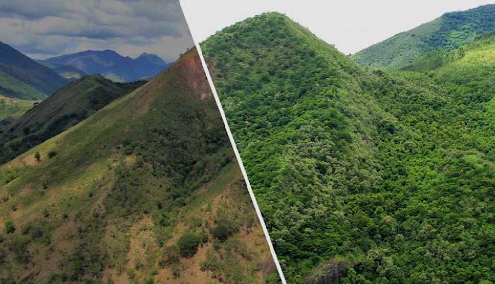 Ecosia celebra millones de búsquedas, sembrando 100 millones de árboles