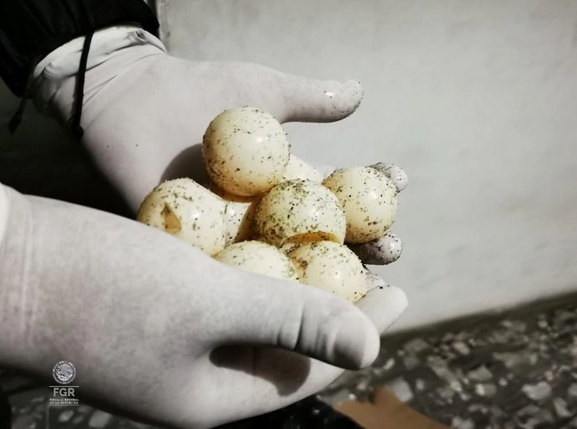 huevos-tortugas-chiapas-1