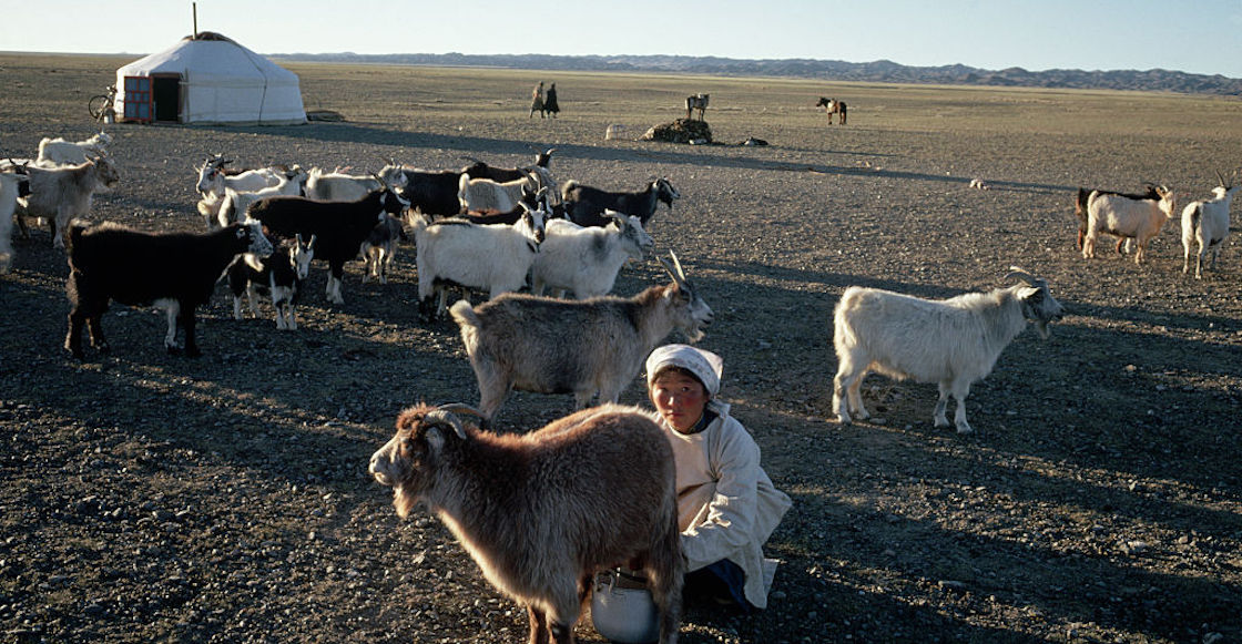 mongolia-peste-bubonica-hovd