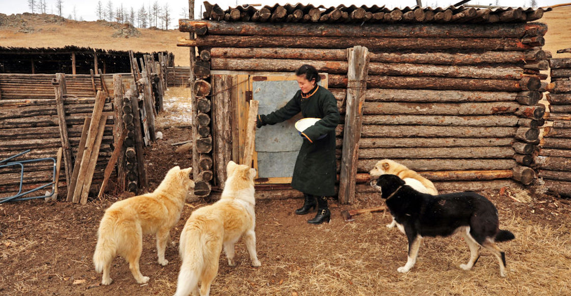 mongolia-peste-bubonica