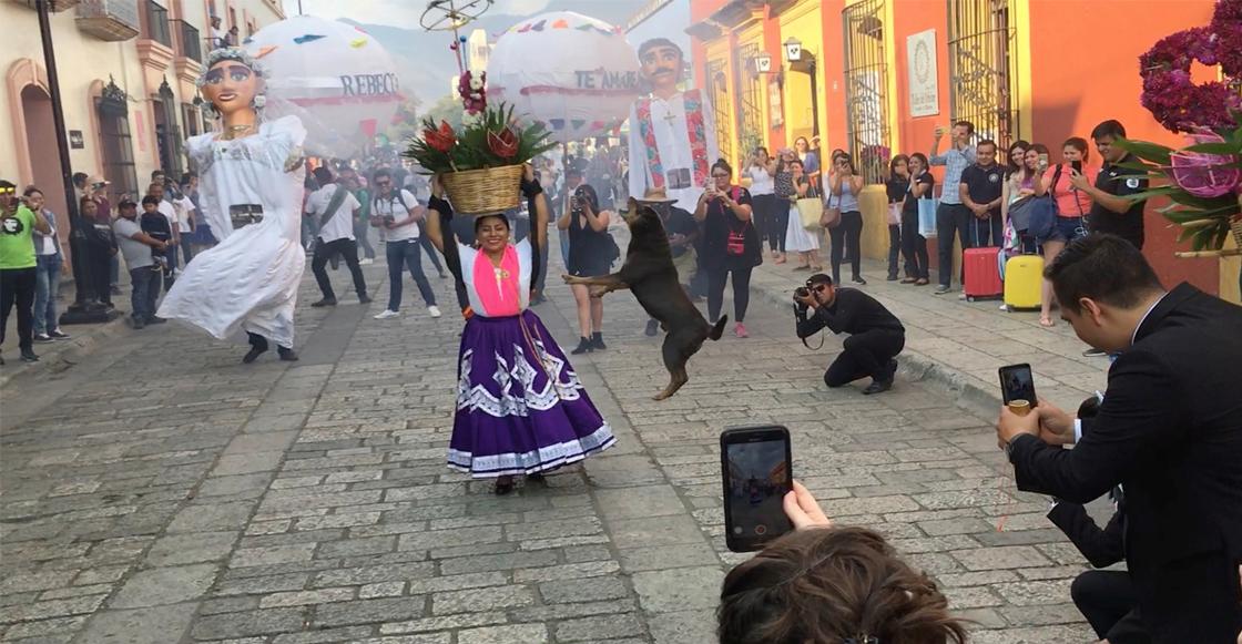 oaxaca-ciudad-festival-perro-bailando