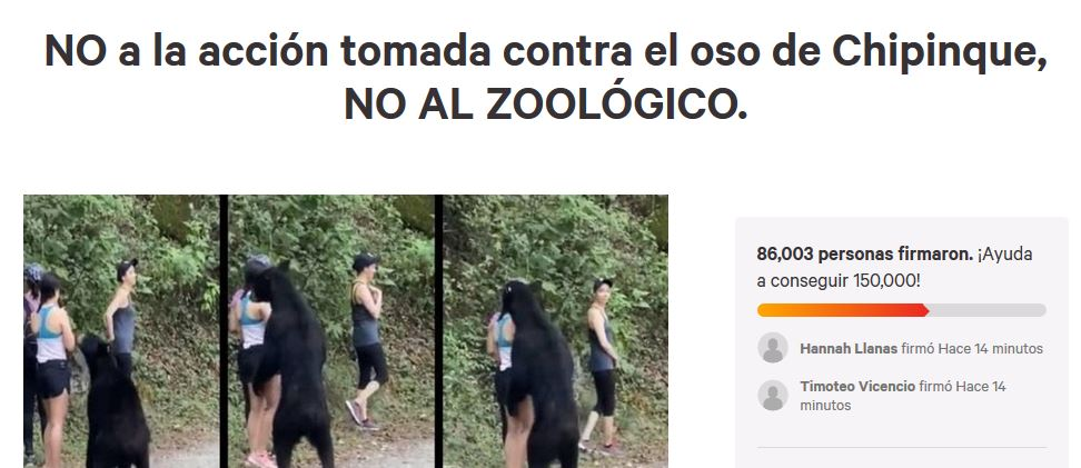 oso-chipinque-nuevo-leon