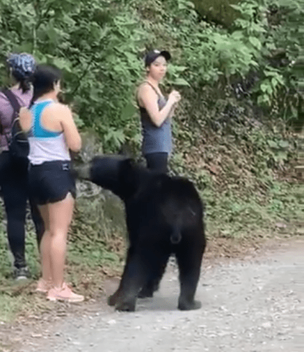 Parque Chipinque capturará al oso que interactuó con turistas en Monterrey