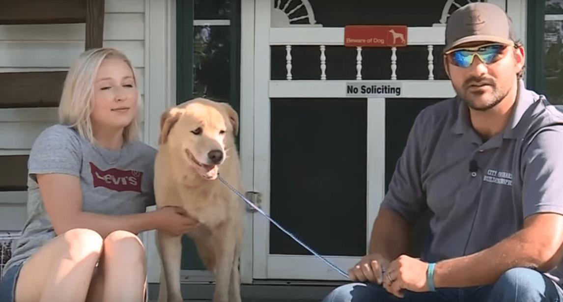 Amaba su hogar: Esta perrita caminó más de 91 km para regresar a su antigua casa