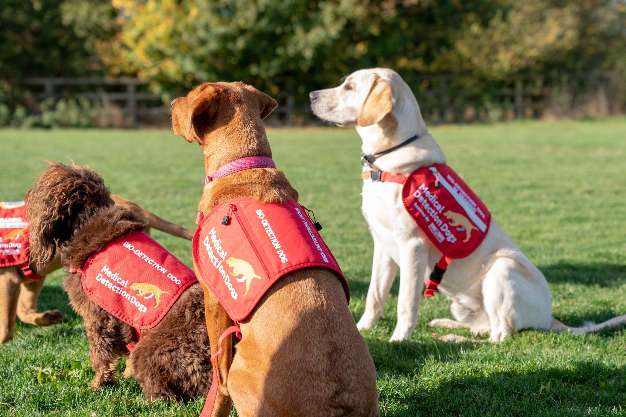 El mejor amigo del hombre: Perros podrían oler y detectar a personas con coronavirus