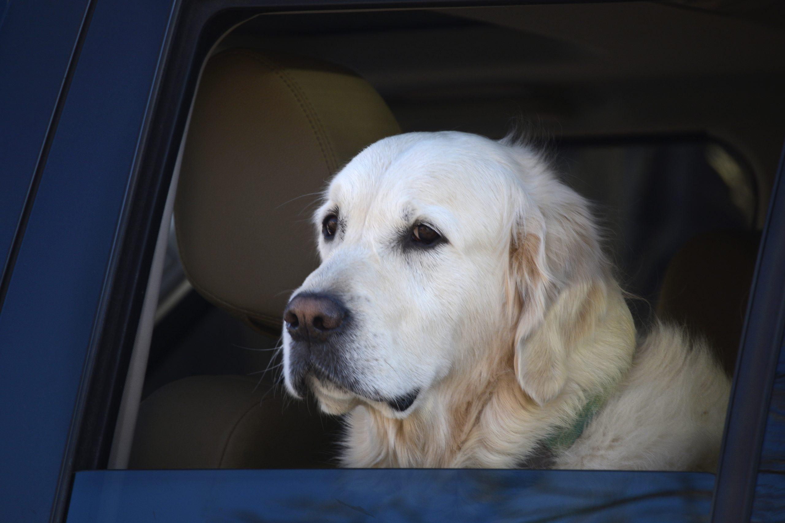Esperen un momento... ¿la edad de los perros no equivale a siete años humanos?