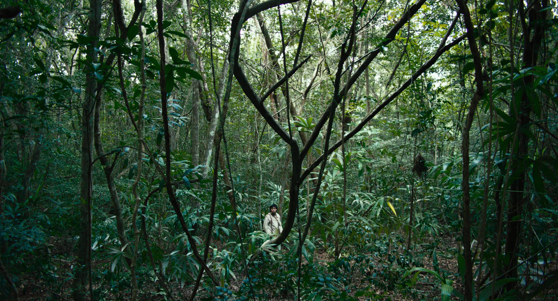 Imagen de 'Selva trágica' de Yulene Olaizola.