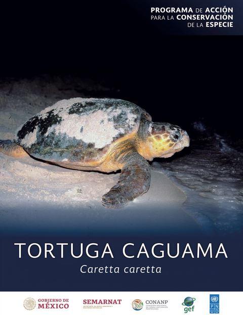 tortuga-caguama-mexico