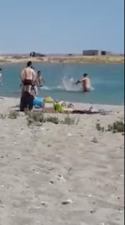 HDLCH nivel: Turistas golpean y dejan inconsciente a una foca para poder tomarse selfies con ella