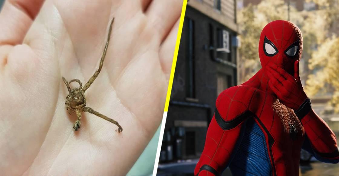 ¡Ni Spiderman! Peta premia a una joven australiana por cuidar a una araña