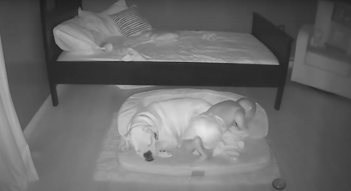 Este bebé fue captado mientras escapaba de su cama para dormir junto a su perro
