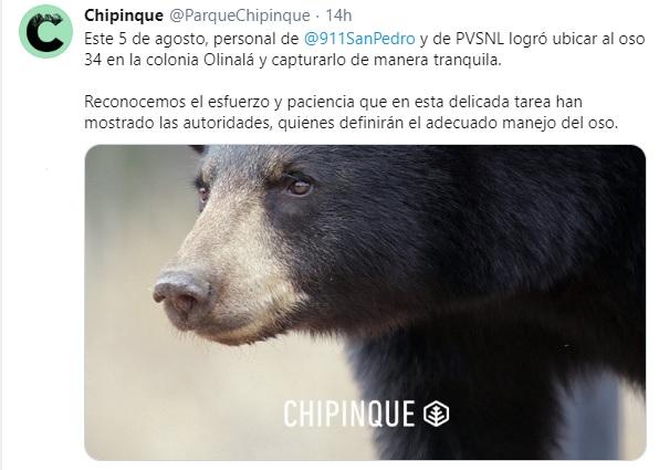 Cptura de oso de Nuevo León