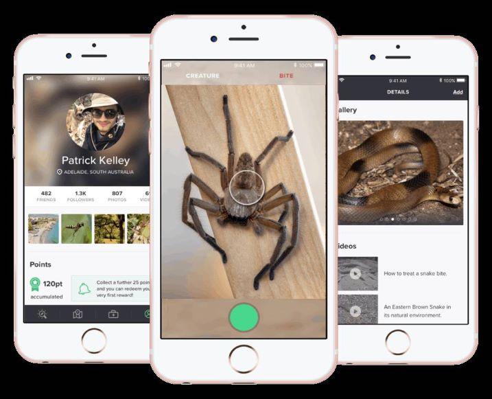 Critterpedia: El 'Shazam' para reconocer arañas y serpientes que podría salvarte