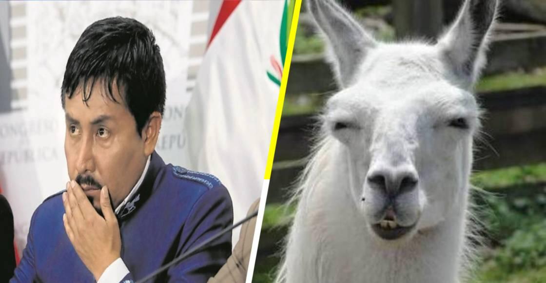 ¡WTF! Gobernador peruano anima a comer carne de llama y dióxido de cloro
