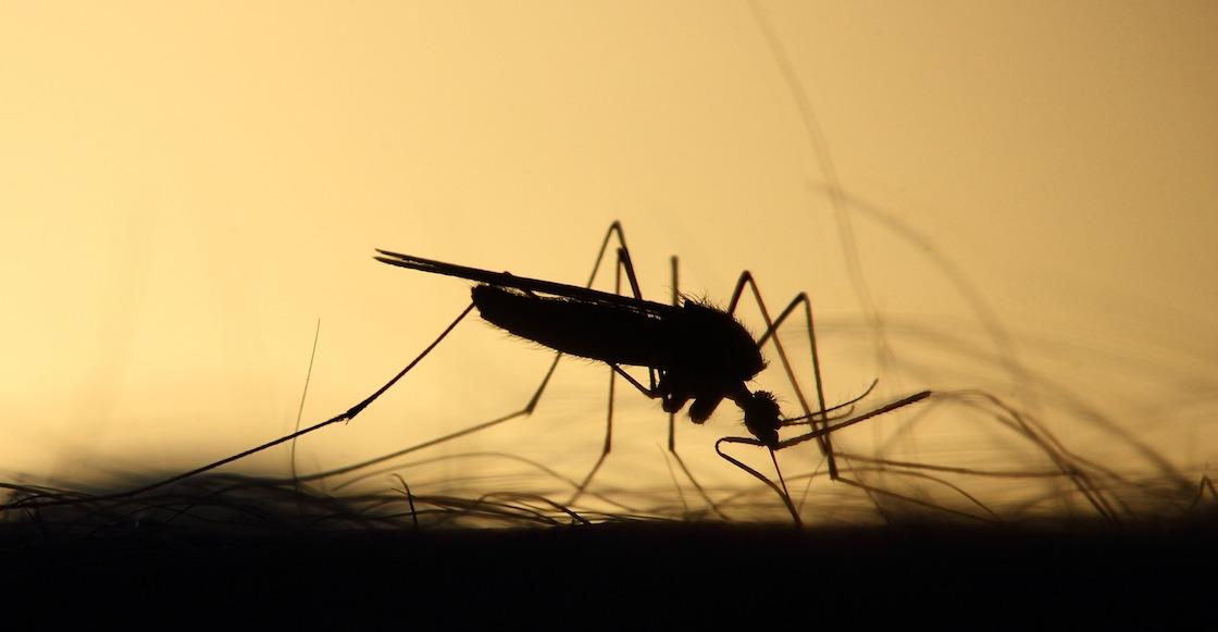 mosquitos-modificados-geneticamente-florida-millones-libres-estudio