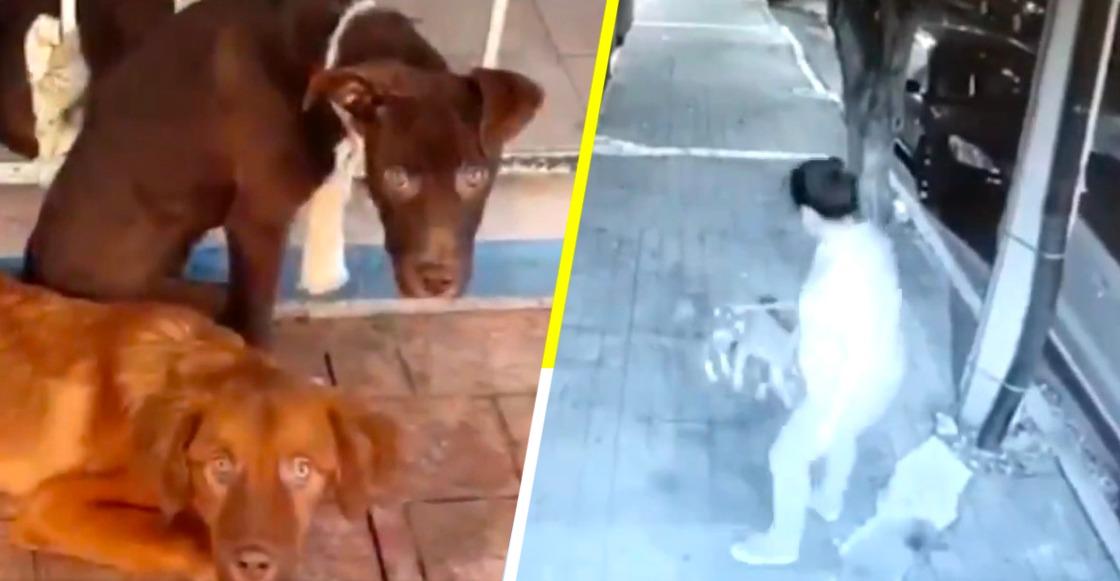 Captan el momento en que una mujer arrastra y abandona a tres perritos en la CDMX