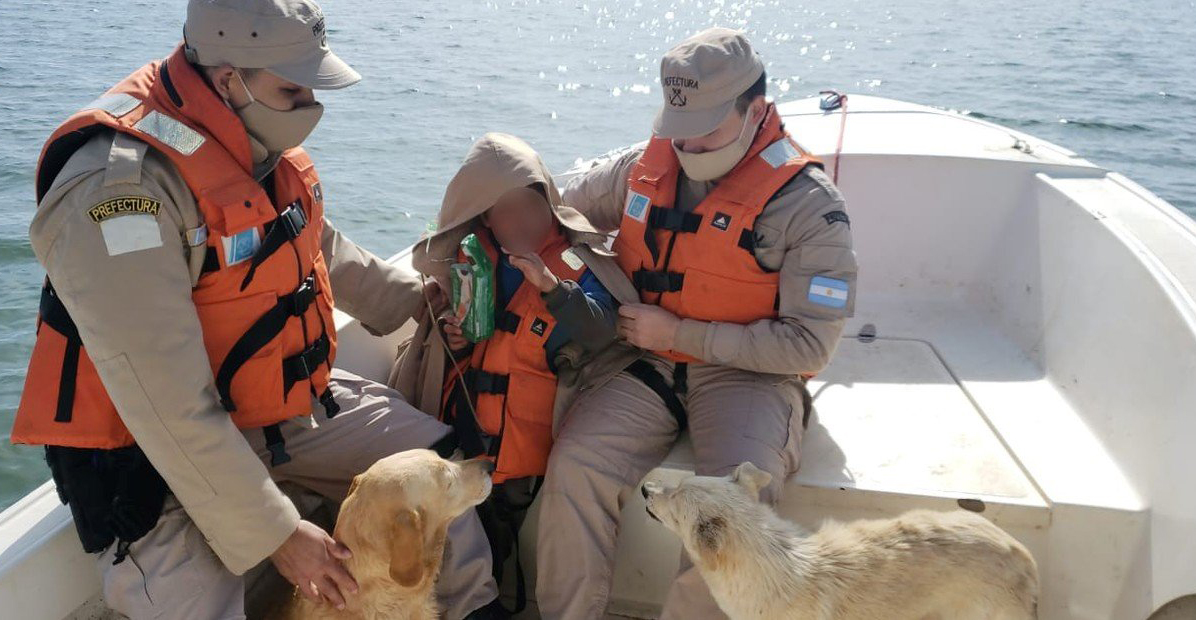 Niño con autismo se perdió en la noche y sobrevivió al frío por el abrazo de dos perros