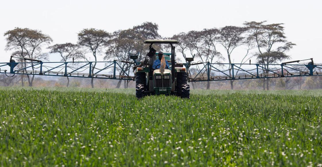 nitrato-fertilizante