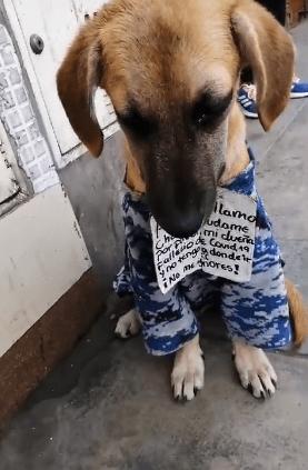 """""""No me ignores"""": Un perrito busca hogar tras la muerte de su dueña por coronavirus"""